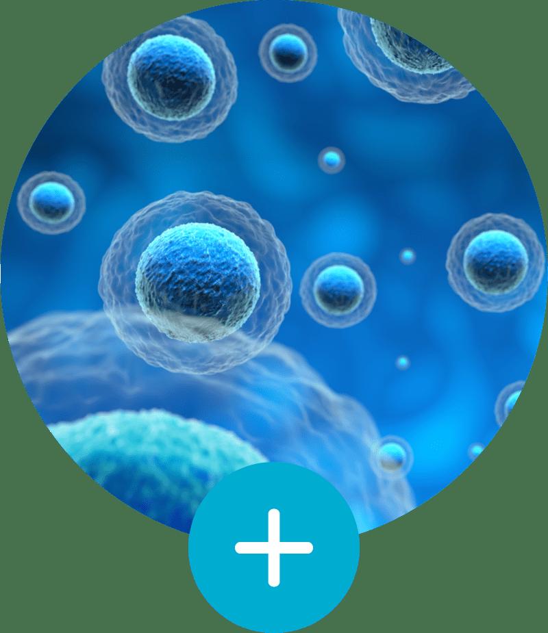 Stronger immune system